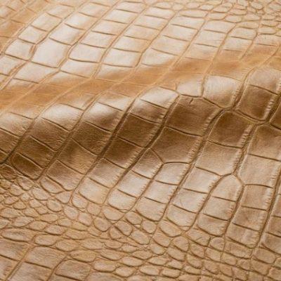 Art. Stampa Crocodile